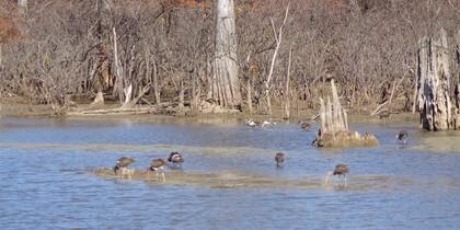 Birds along the shore line