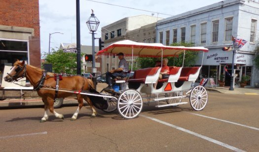 Horse Drawn Carriage Ride - in the South for a Honeymoon