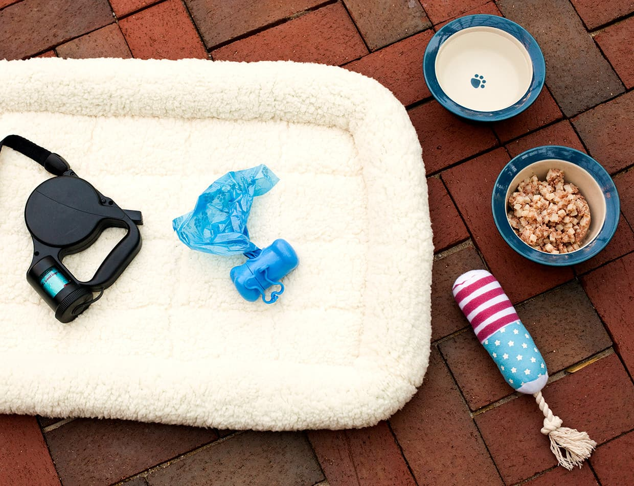 bed, leash, bags and bowls for a dog