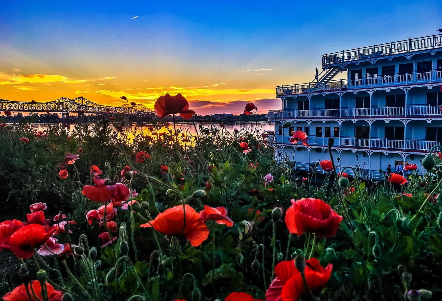 poppies in front of a riverboat at susnet