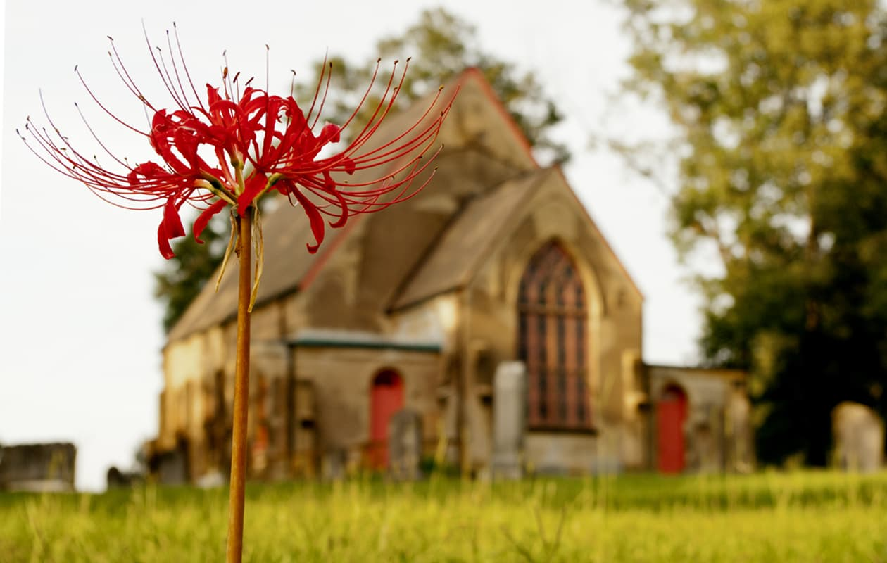 old church in Natchez with big red flower